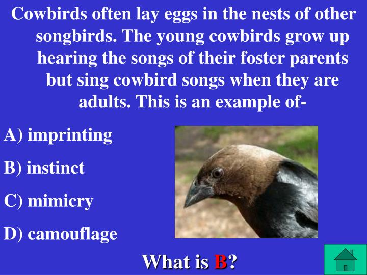 Cowbirds often lay eggs in the nests of other songbirds. The young cowbirds grow up hearing the songs of their foster parents but sing cowbird songs when they are adults. This is an example of-