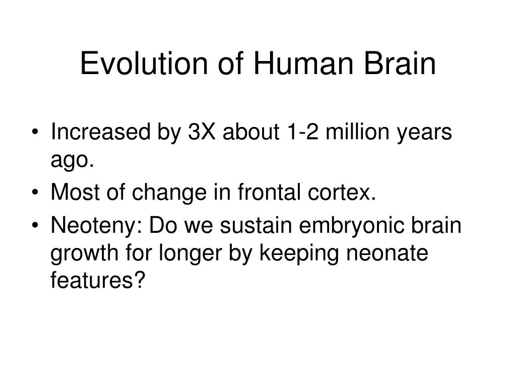 Evolution of Human Brain