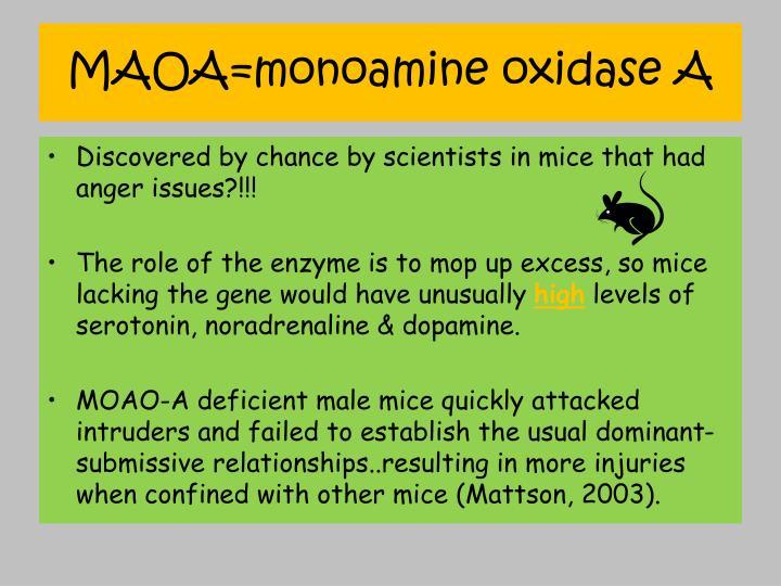 MAOA=monoamine oxidase A