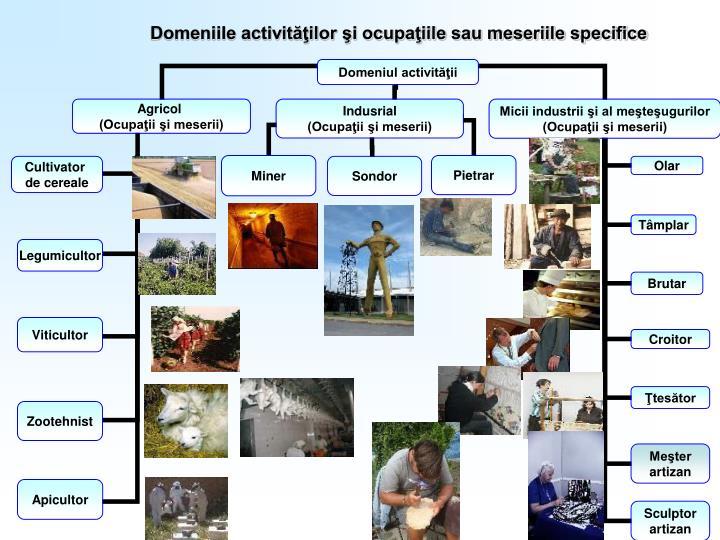 Domeniile activităţilor şi ocupaţiile sau meseriile specifice