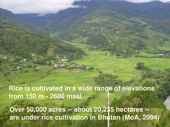 Rice is cultivated in a wide range of elevations from 150 m - 2600