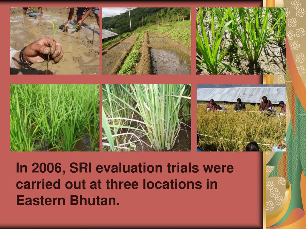 In 2006, SRI evaluation trials were      carried out at three locations in        Eastern Bhutan.