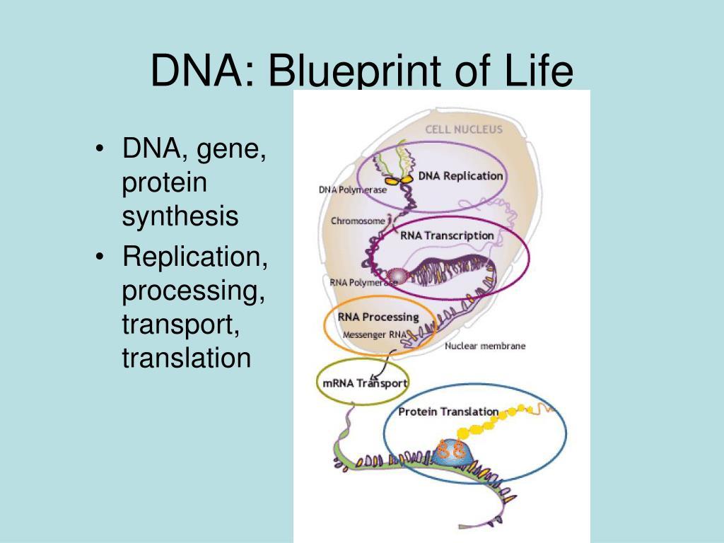 DNA: Blueprint of Life