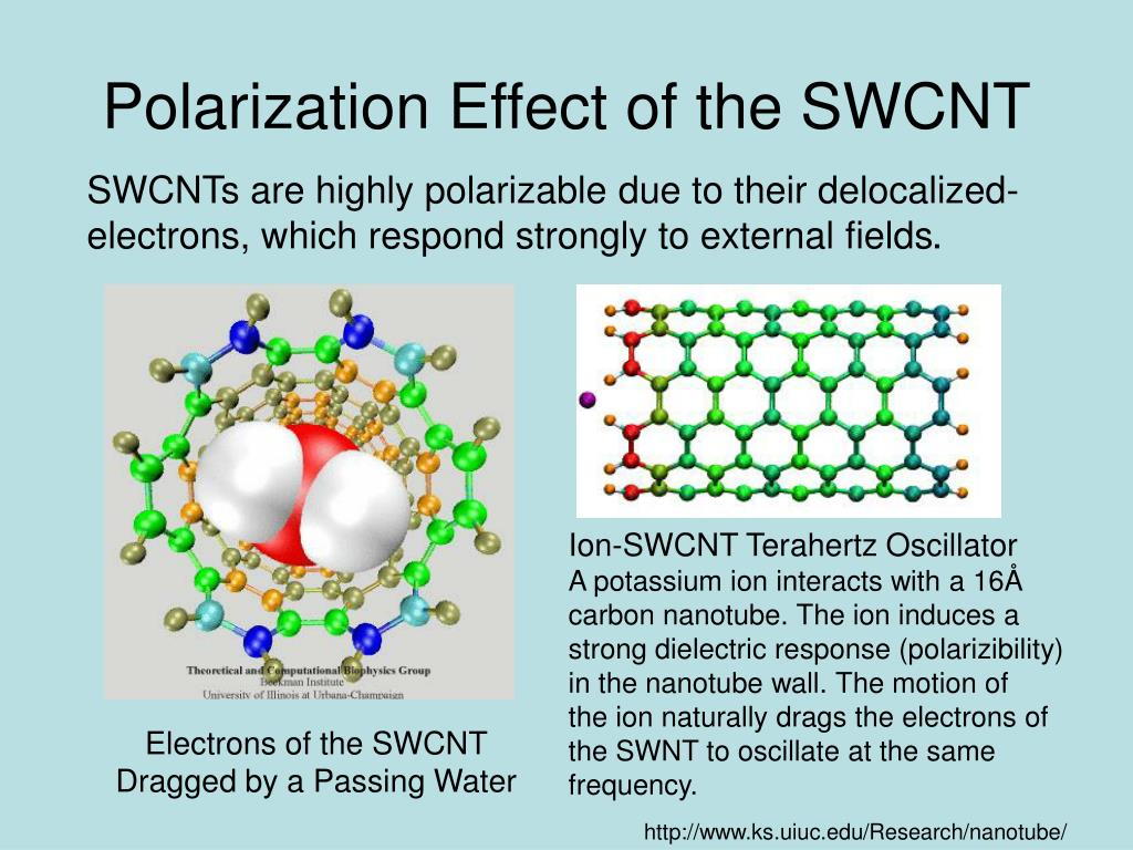 Polarization Effect of the SWCNT
