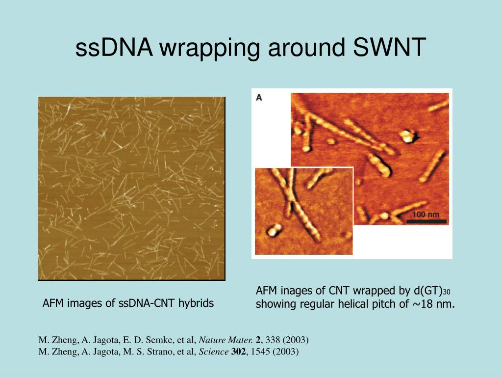ssDNA wrapping around SWNT