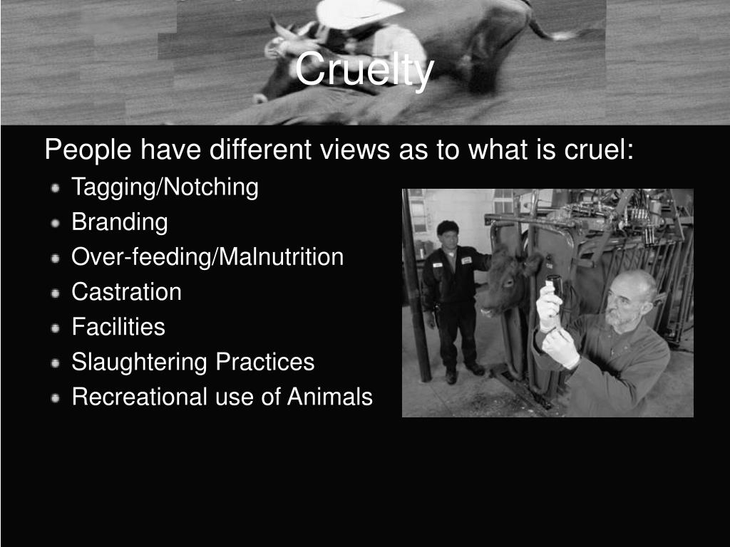 the humane treatment of animals vs While this is not a website about people for the ethical treatment of animals who kills more animals: unlike the humane society of the united states.