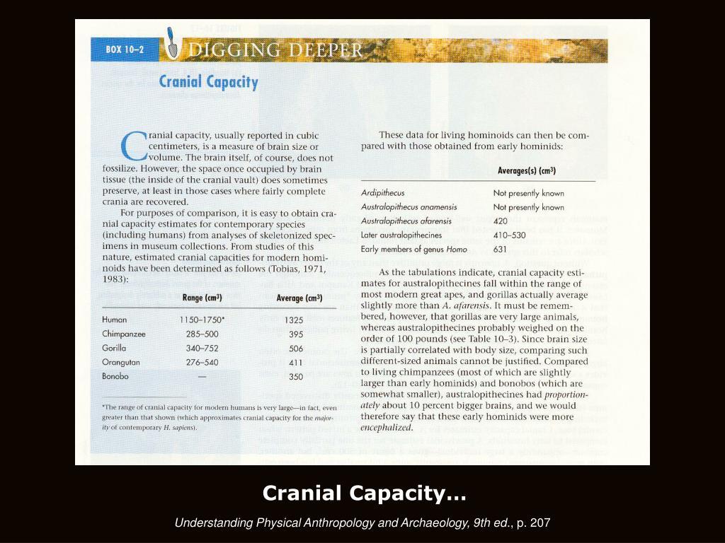Cranial Capacity…