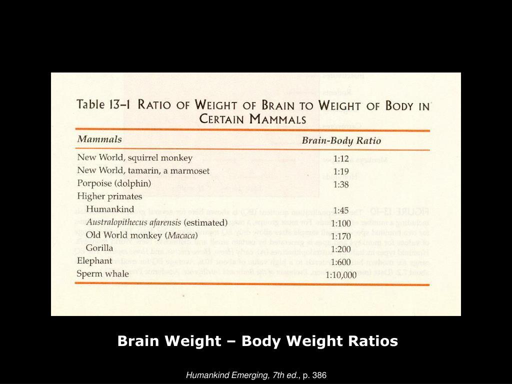 Brain Weight – Body Weight Ratios