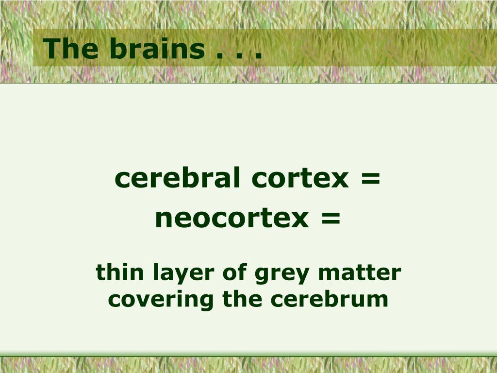 The brains . . .