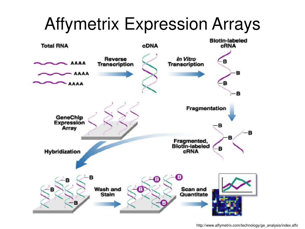 Affymetrix Expression Arrays