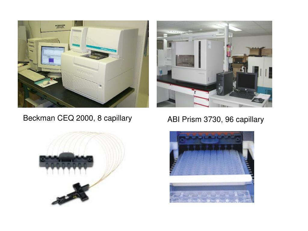 Beckman CEQ 2000, 8 capillary