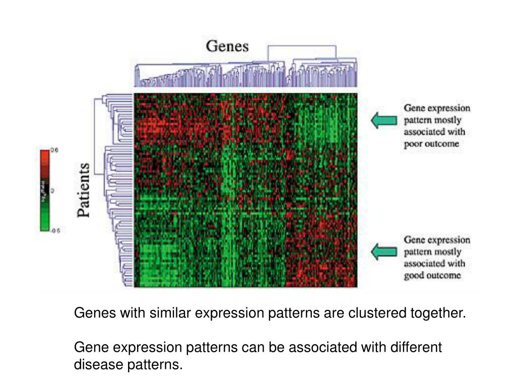 Genes with similar expression patterns are clustered together.