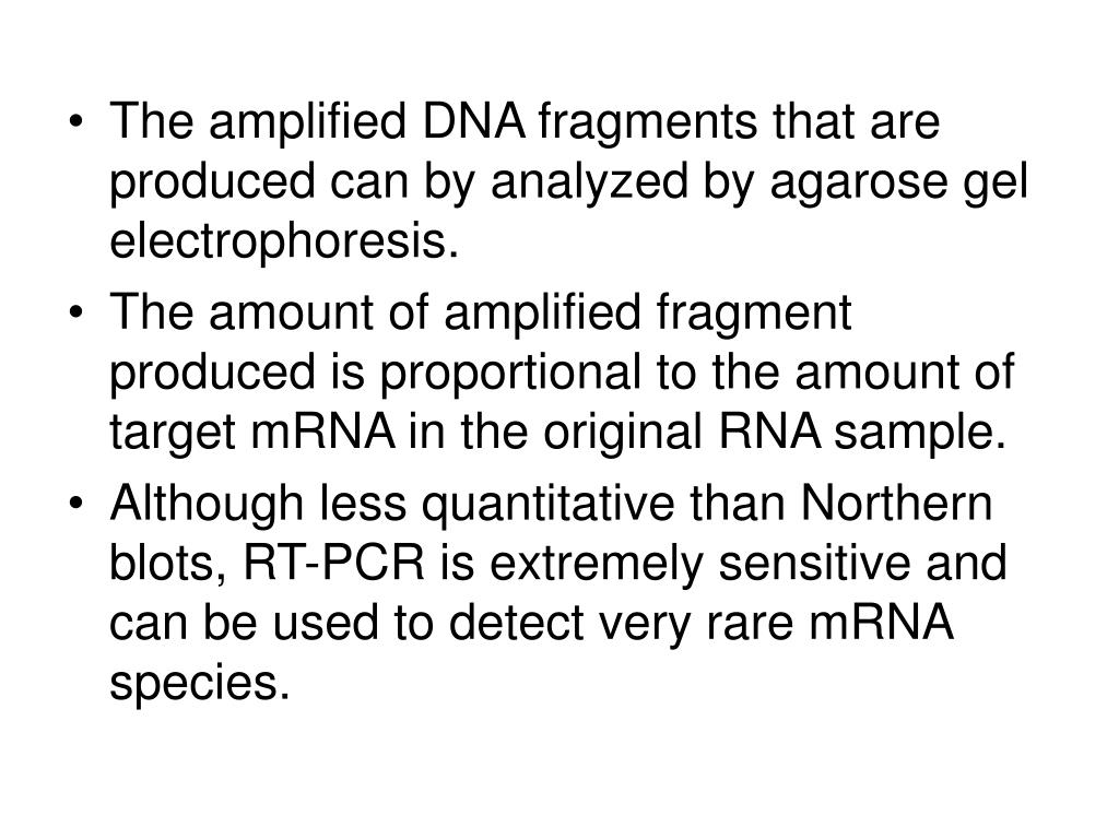 The amplified DNA fragments that are produced can by analyzed by agarose gel electrophoresis.