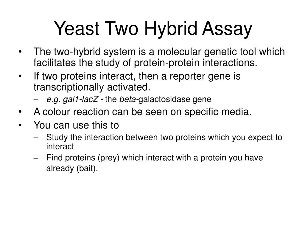 Yeast Two Hybrid Assay