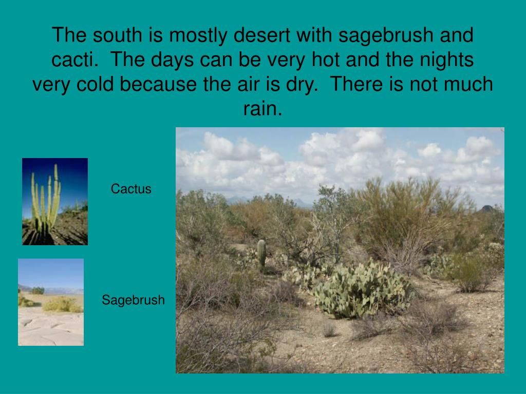 The south is mostly desert with sagebrush and cacti.  The days can be very hot and the nights very cold because the air is dry.  There is not much rain.