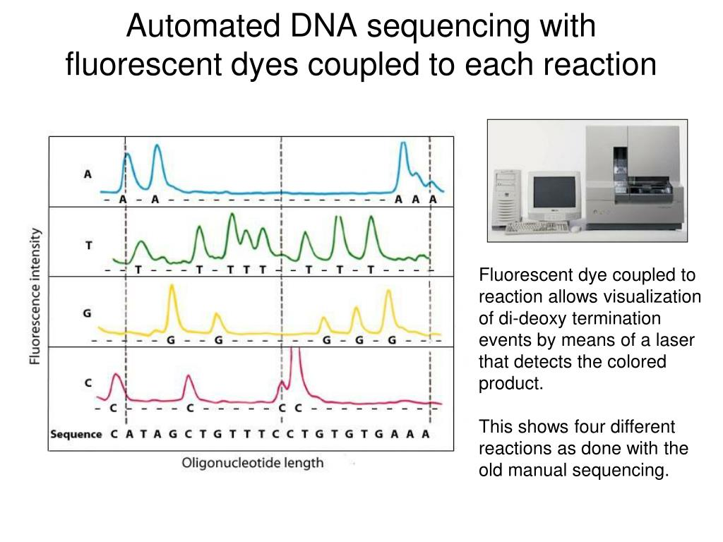 Automated DNA sequencing with fluorescent dyes coupled to each reaction