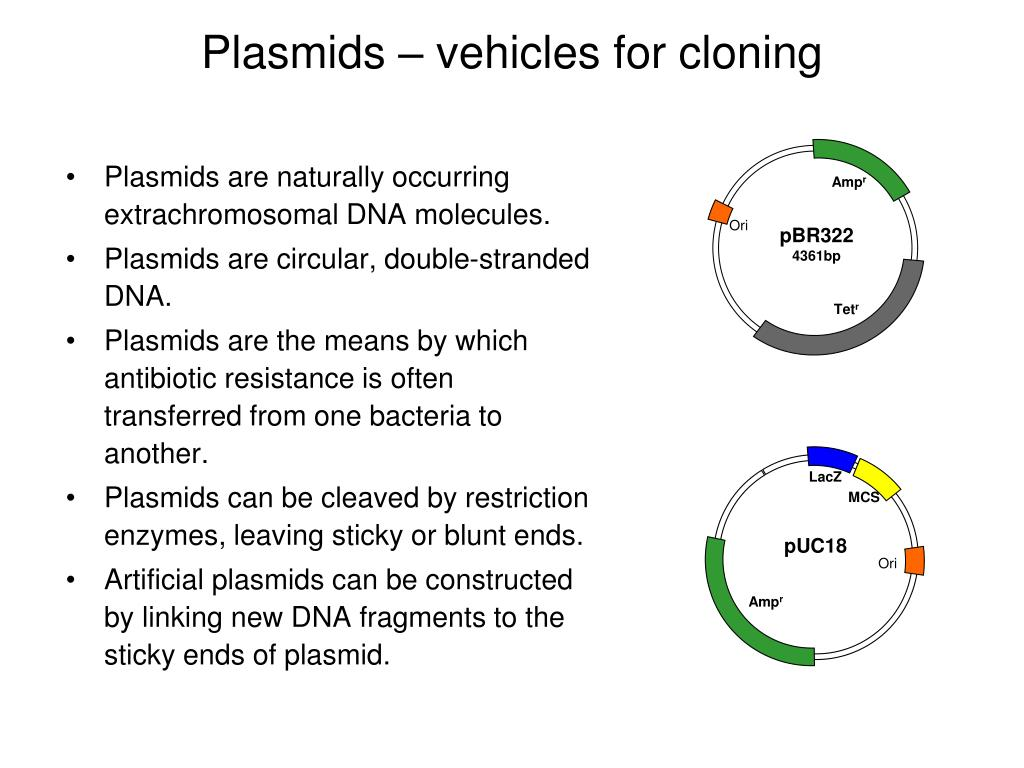 thesis molecular cloning Re: failure of molecular cloning by mchlbrmn » oct 23 2012 4:17 pm relaxin wrote:cloning involved lots of steps, and anything can go wrong in order to pinpoint your problem, we have to know in more details on how you are doing the cloning (such as pcr fragment or re fragment t/a, blunt-end or sticky end ligation), and.