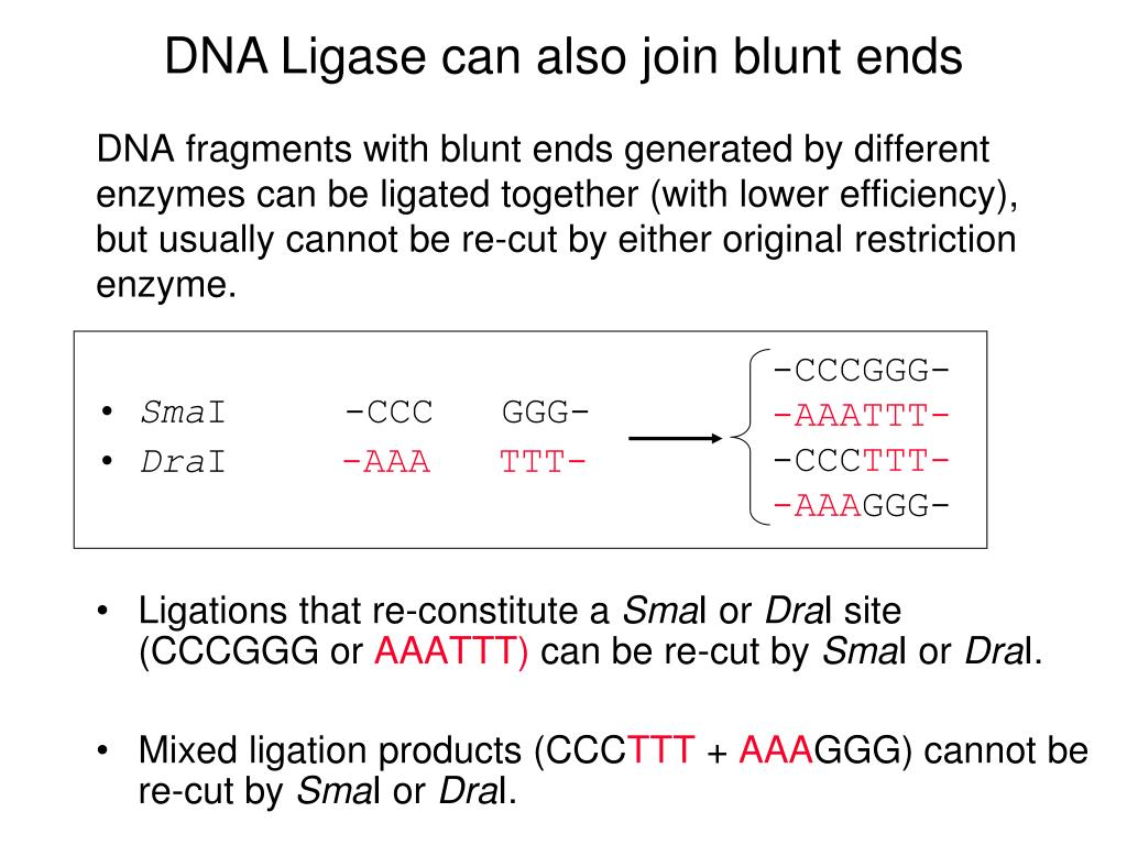 DNA Ligase can also join blunt ends