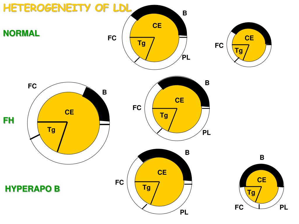 HETEROGENEITY OF LDL