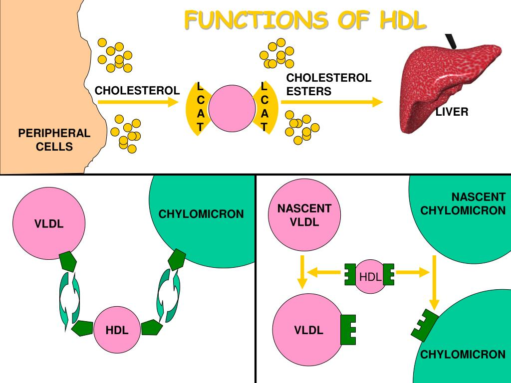 FUNCTIONS OF HDL