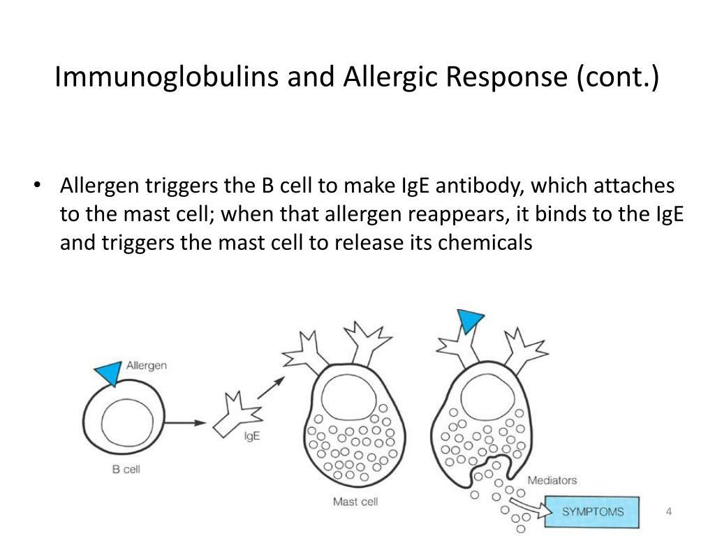 Immunoglobulins and Allergic Response (cont.)