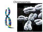 chromosomes1