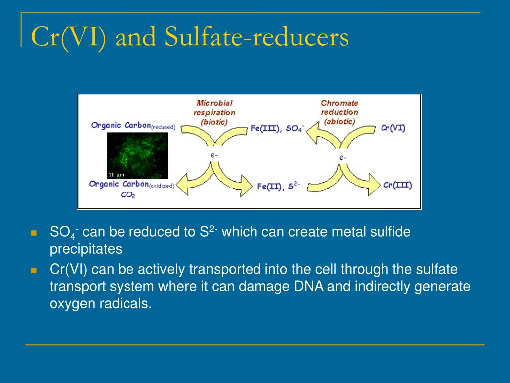 Cr(VI) and Sulfate-reducers
