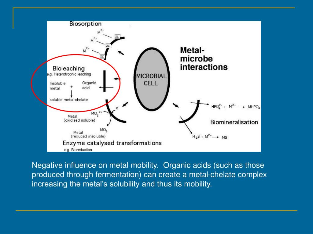Negative influence on metal mobility.  Organic acids (such as those produced through fermentation) can create a metal-chelate complex increasing the metal's solubility and thus its mobility.