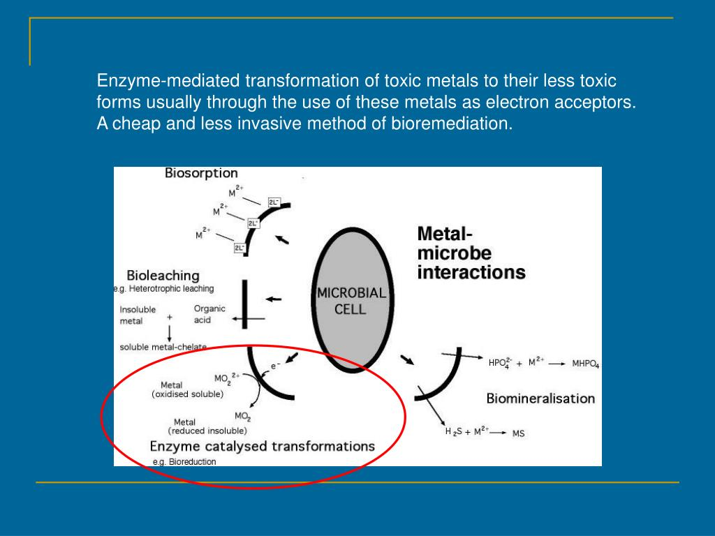 Enzyme-mediated transformation of toxic metals to their less toxic forms usually through the use of these metals as electron acceptors.  A cheap and less invasive method of bioremediation.