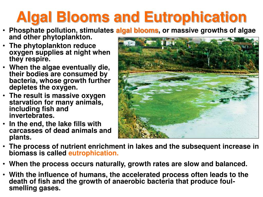 Algal Blooms and Eutrophication