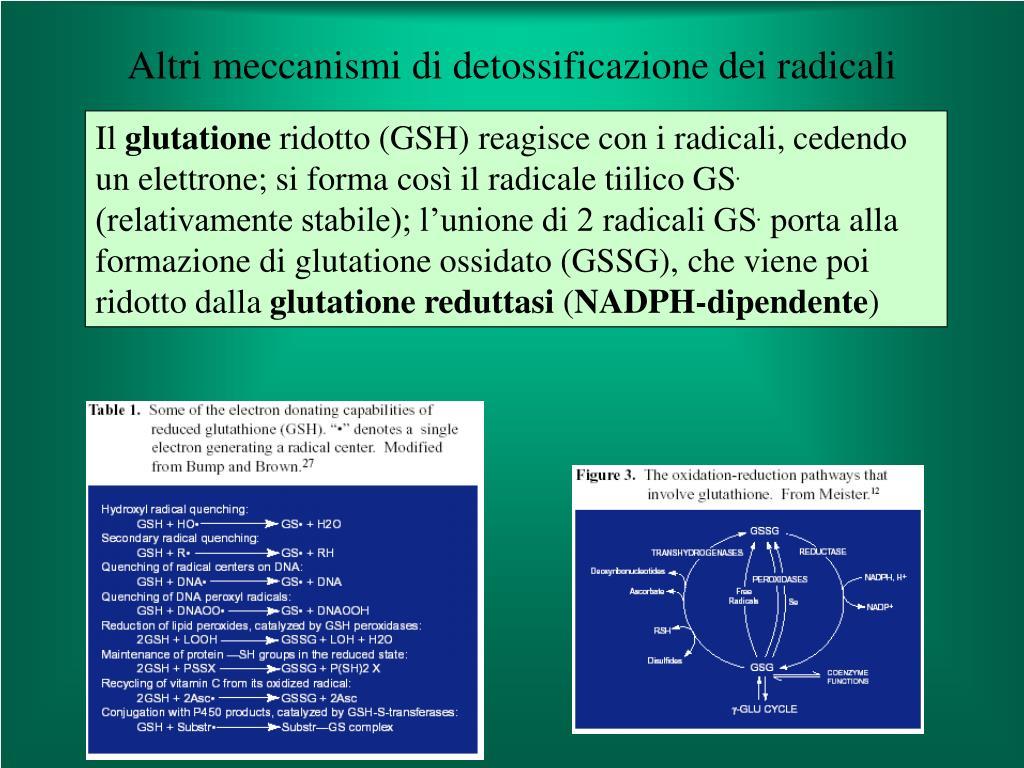 Altri meccanismi di detossificazione dei radicali