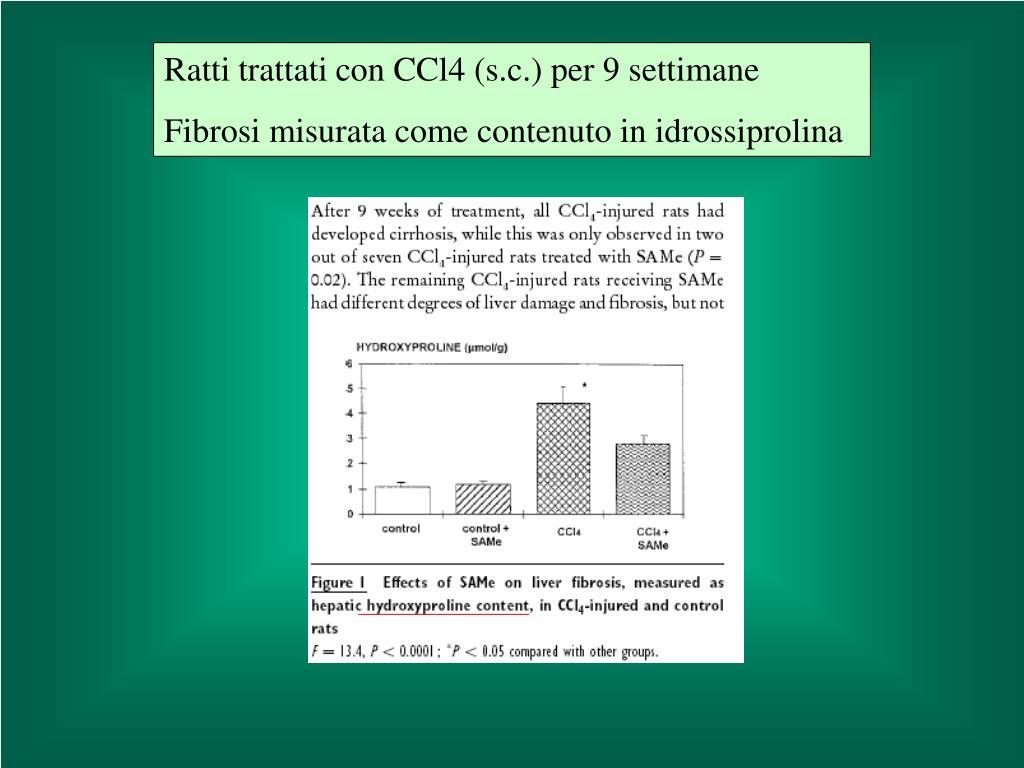 Ratti trattati con CCl4 (s.c.) per 9 settimane