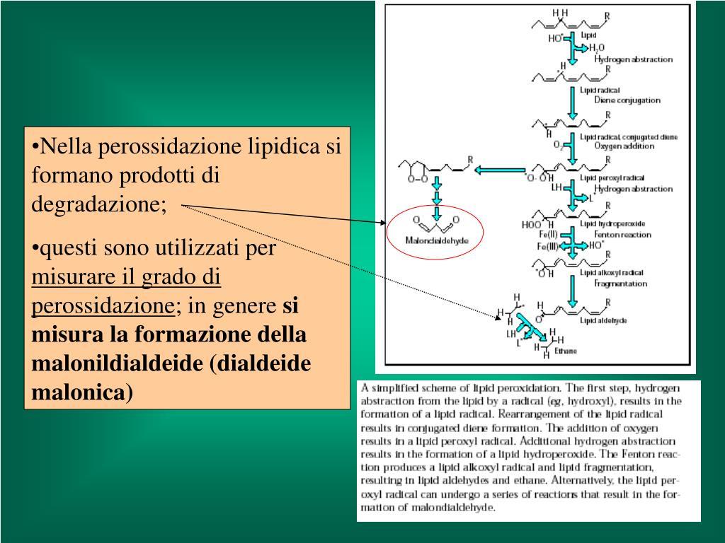 Nella perossidazione lipidica si formano prodotti di degradazione;