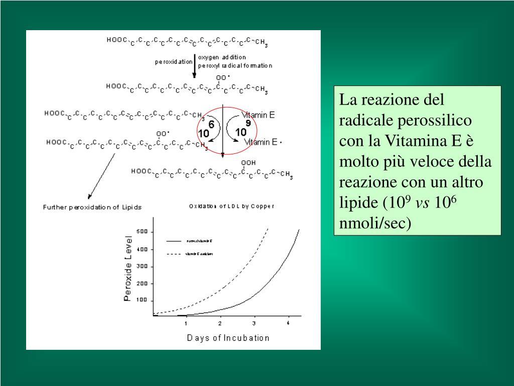 La reazione del radicale perossilico con la Vitamina E è molto più veloce della reazione con un altro lipide (10