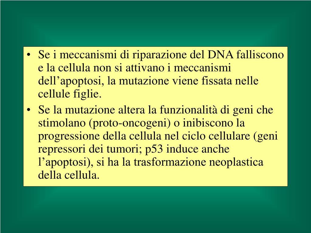 Se i meccanismi di riparazione del DNA falliscono e la cellula non si attivano i meccanismi dell'apoptosi, la mutazione viene fissata nelle cellule figlie.