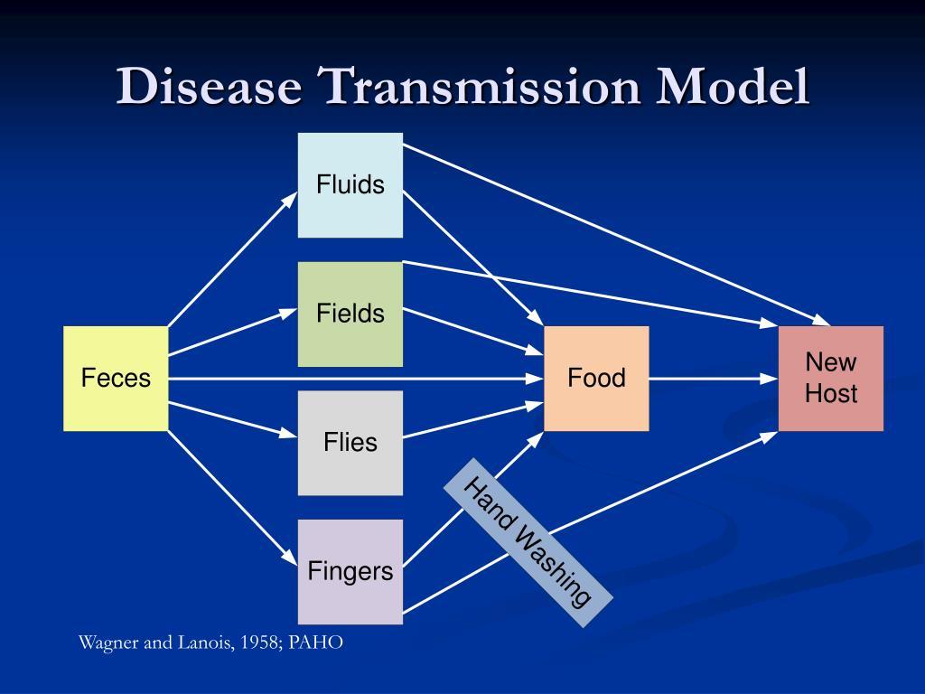 Disease Transmission Model