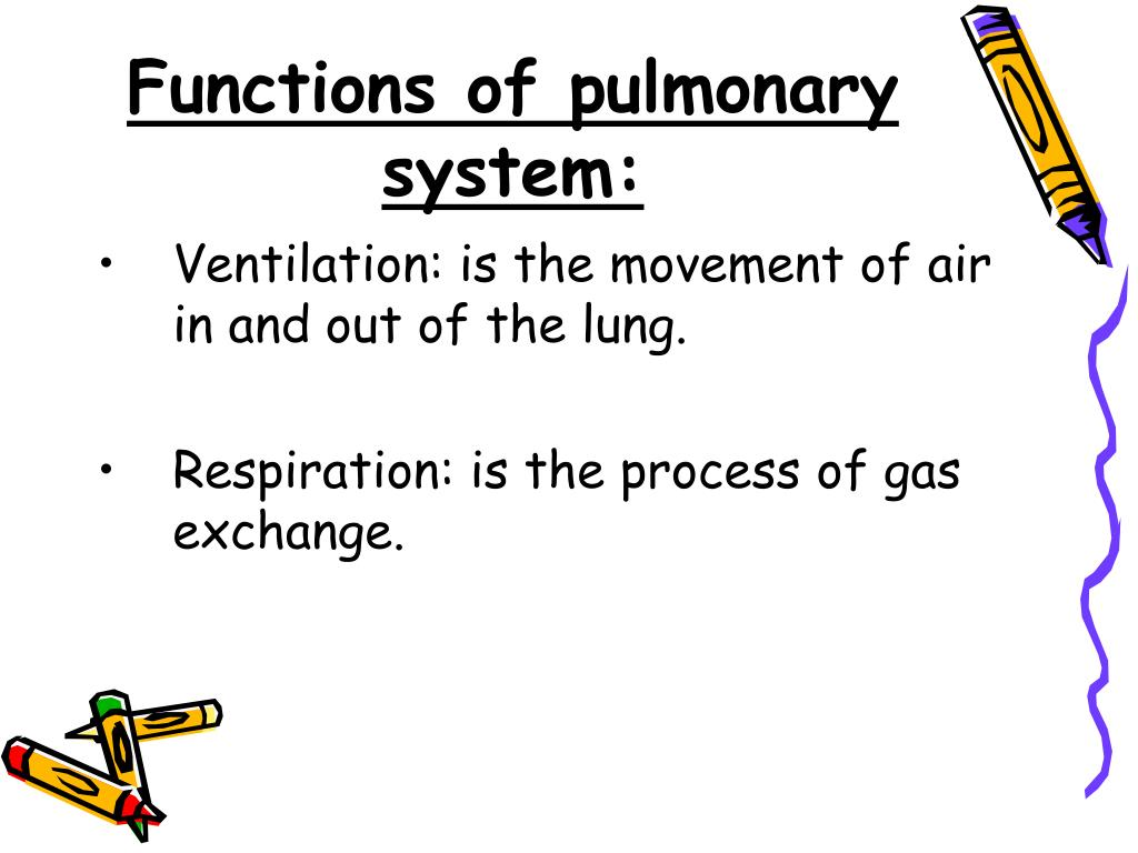 Functions of pulmonary system: