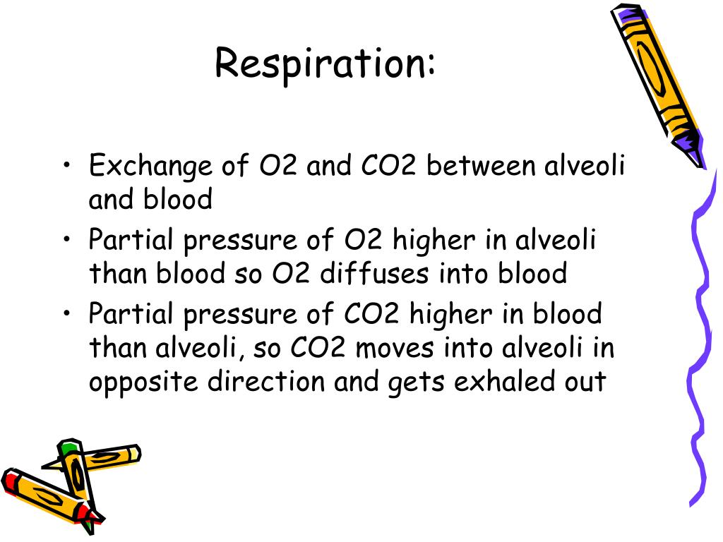 Respiration: