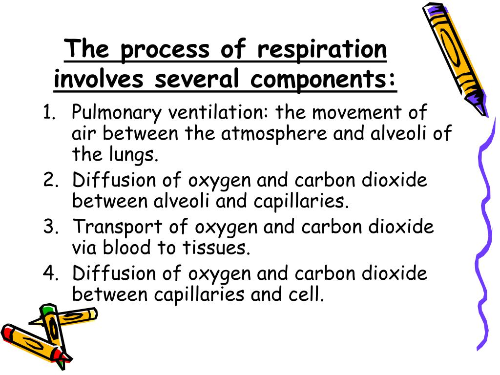 The process of respiration involves several components: