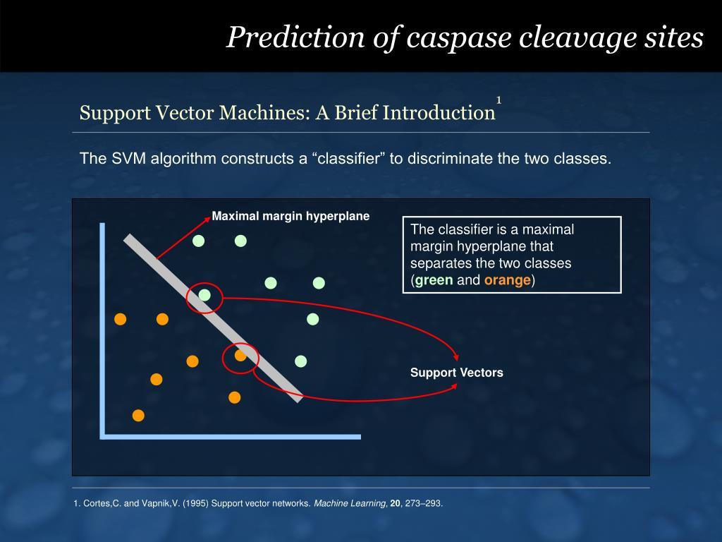 Prediction of caspase cleavage sites