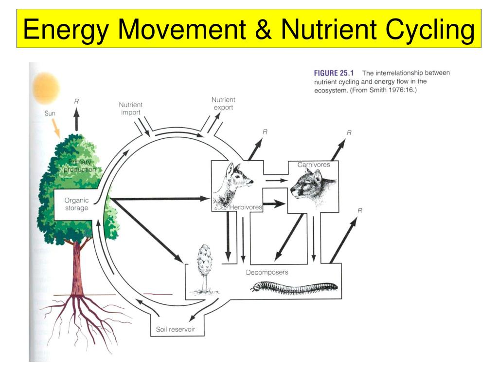 Energy Movement & Nutrient Cycling