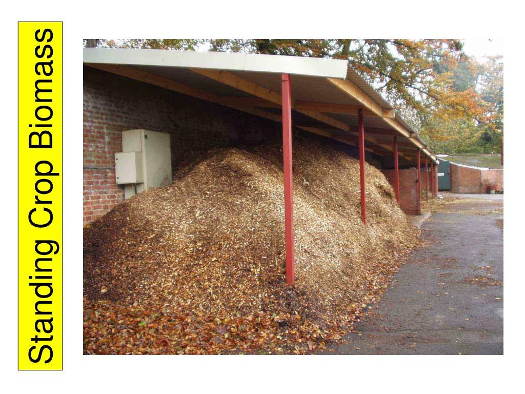 Standing Crop Biomass