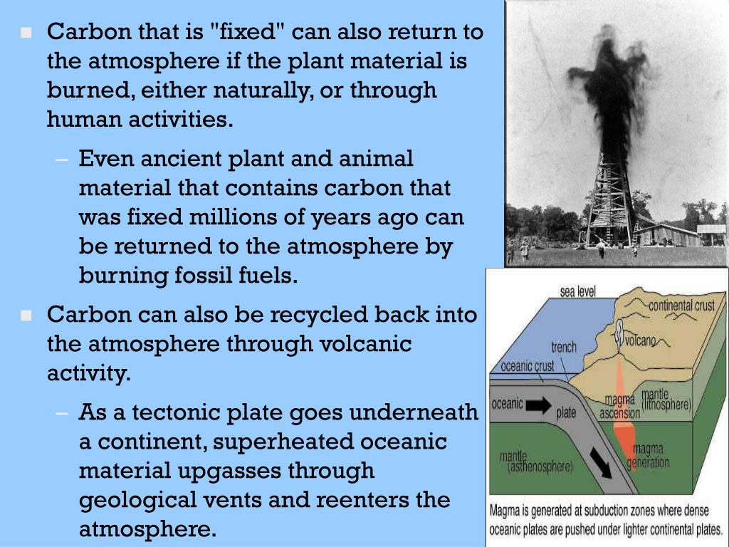 "Carbon that is ""fixed"" can also return to the atmosphere if the plant material is burned, either naturally, or through human activities."