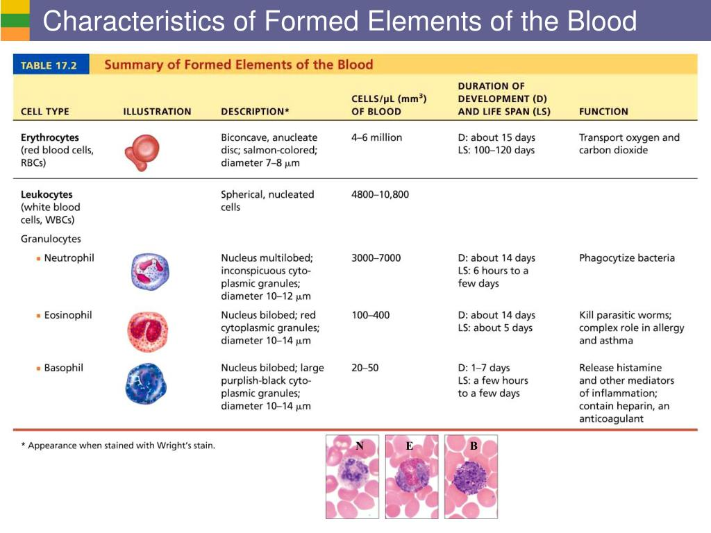 Characteristics of Formed Elements of the Blood