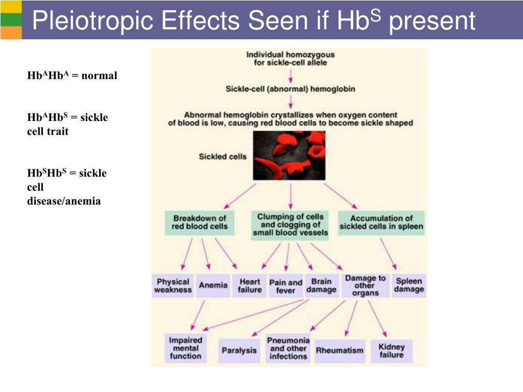 Pleiotropic Effects Seen if Hb