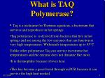 what is taq polymerase