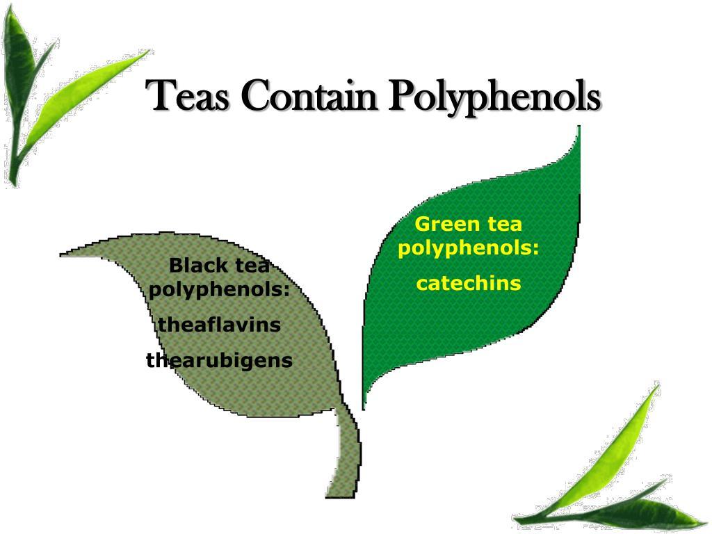 Teas Contain Polyphenols