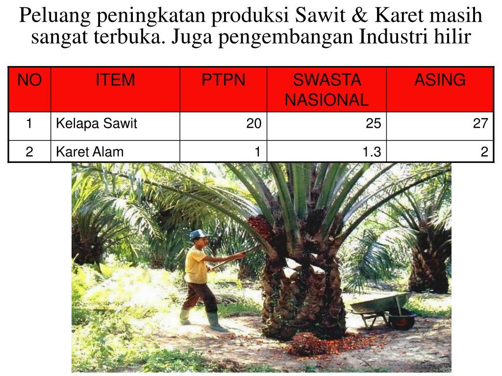 Peluang peningkatan produksi Sawit & Karet masih sangat terbuka. Juga pengembangan Industri hilir