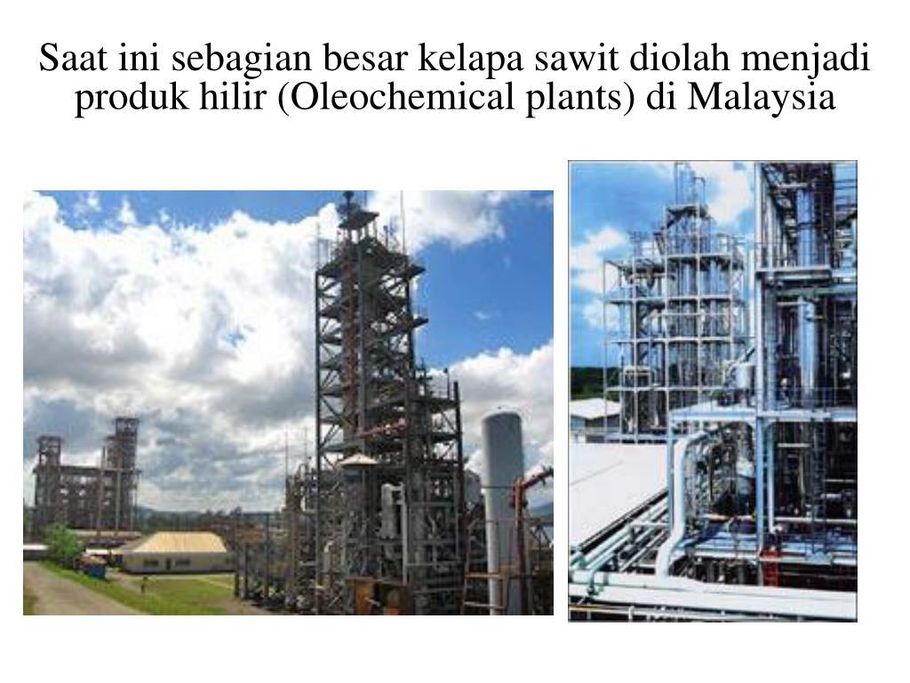 Saat ini sebagian besar kelapa sawit diolah menjadi produk hilir (Oleochemical plants) di Malaysia