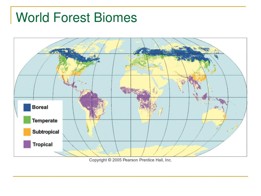 World Forest Biomes